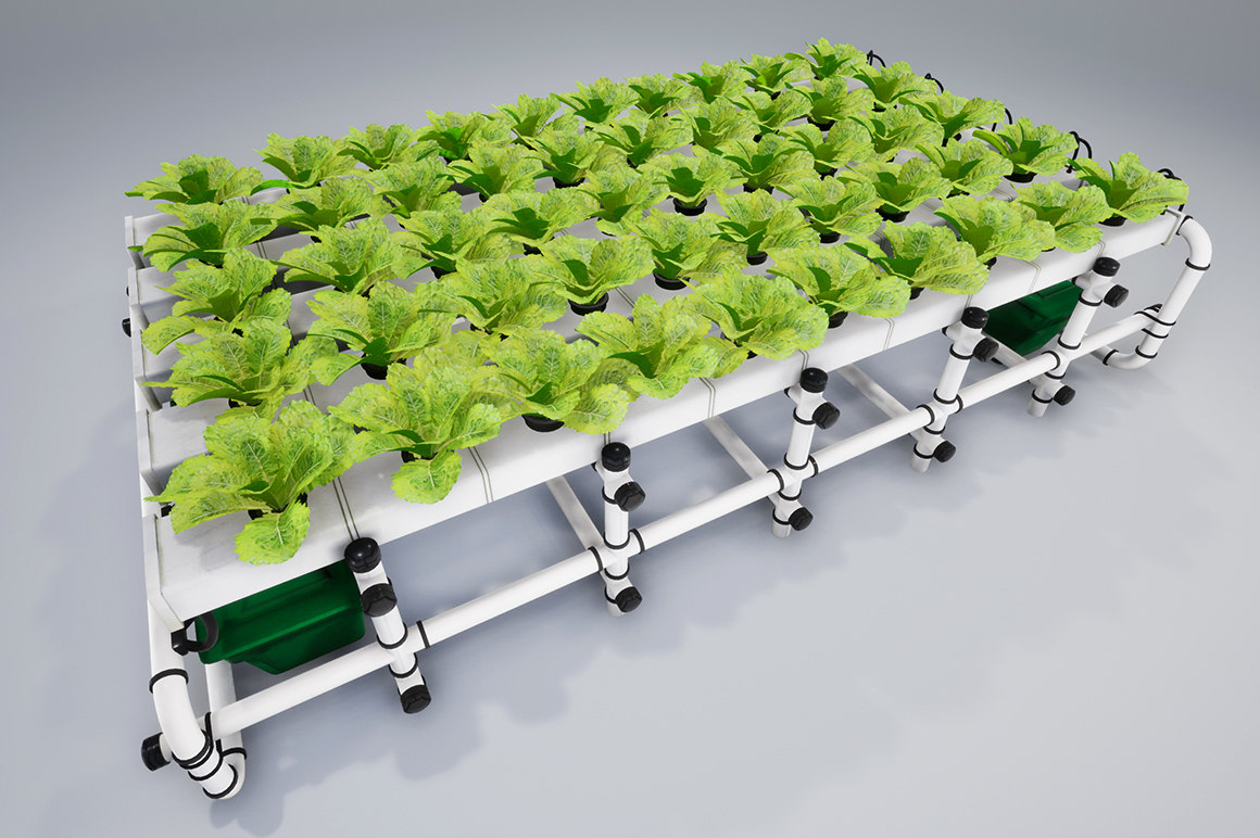 lettuce salad vegetable model