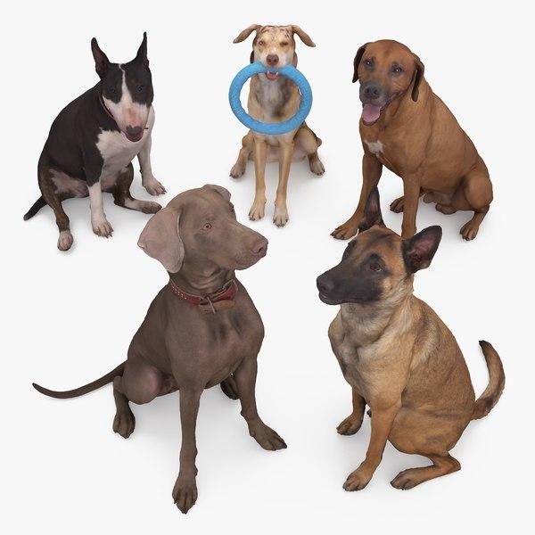 3D animals sitting dog
