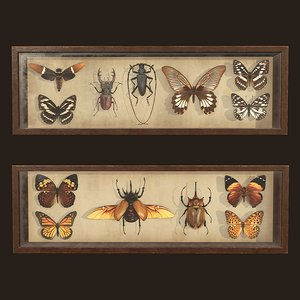 entomological pictures ready pbr 3D model