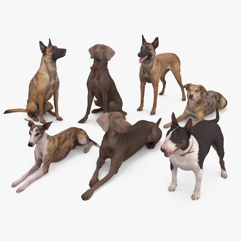 3D animals weimaraner dog