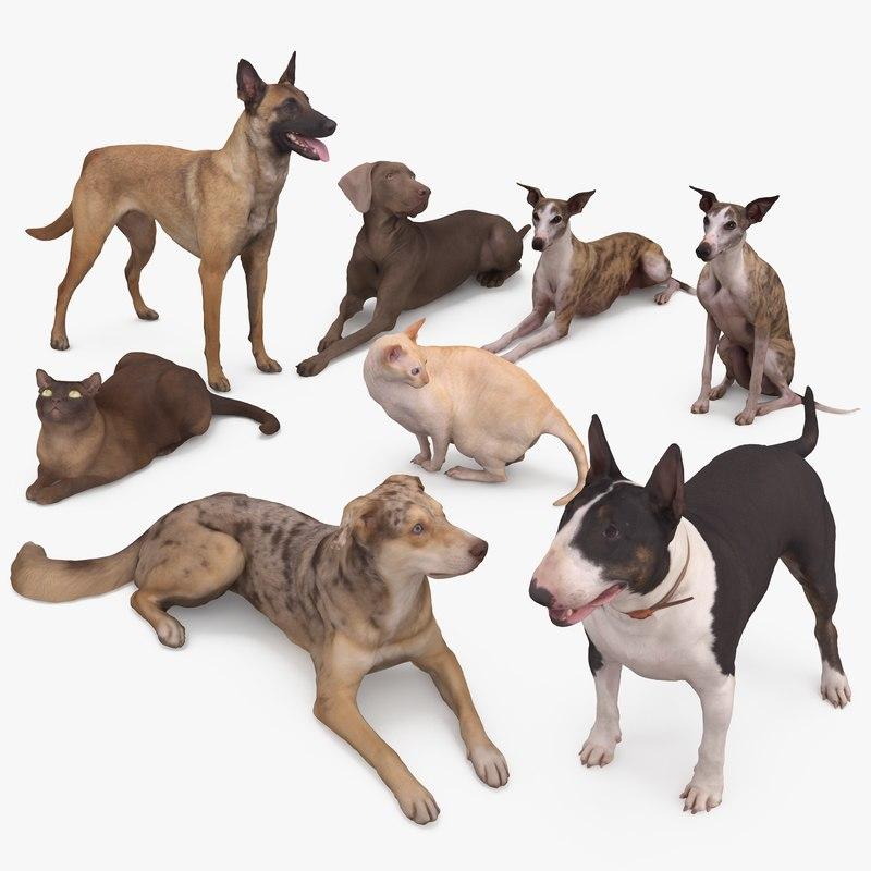 3D animals weimaraner dog whippet