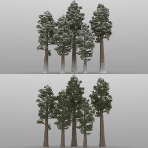 5 sequoia trees 3D model