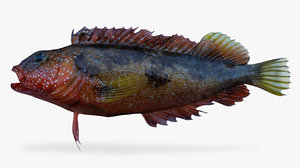largemouth blenny 3D model
