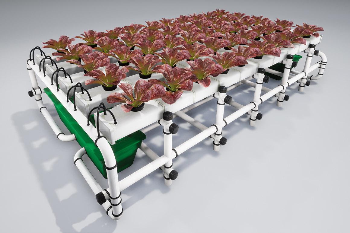 3D lettuce salad vegetable