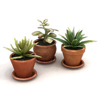 Potted Plants Bundle 2C