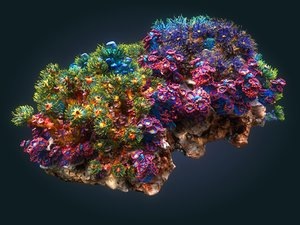 3D coral reef ecosystem model