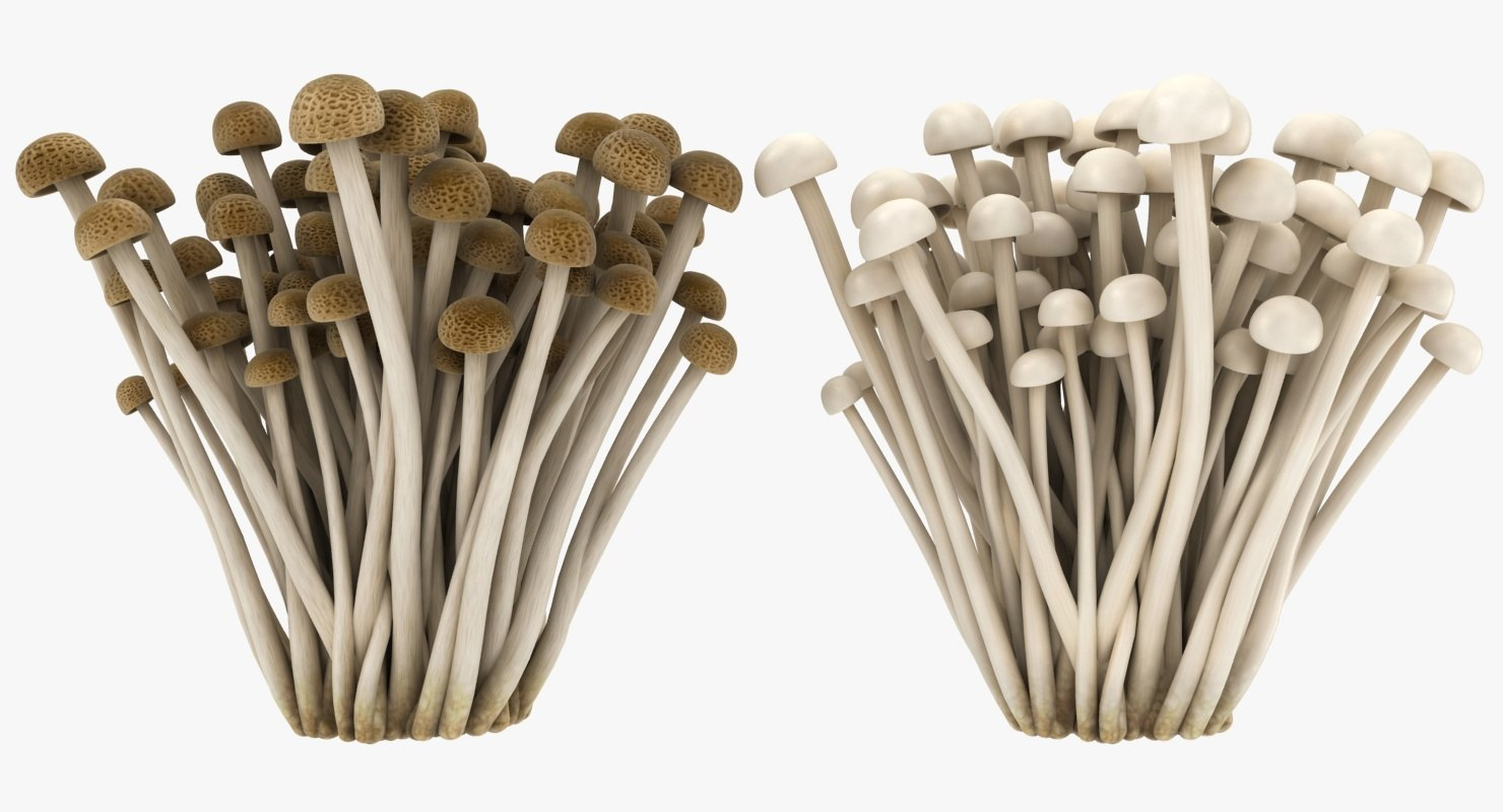 realistic enokitake set 3D model