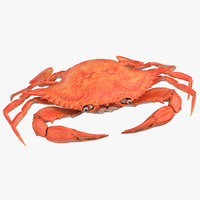 crab animal crustacean 3D