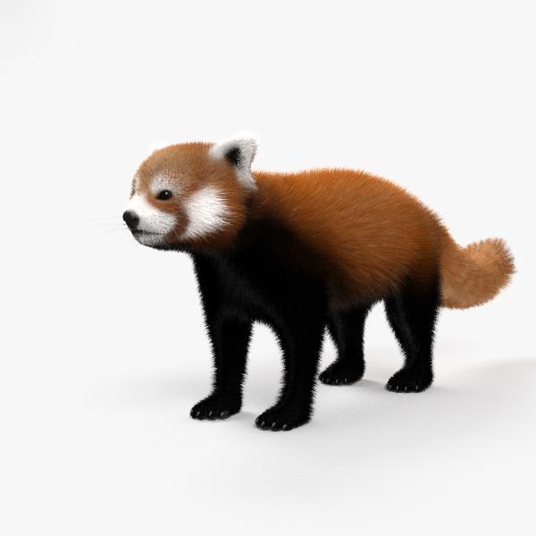 red panda 3D model