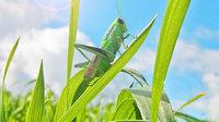 grasshopper animation rigged 3D model