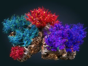 3D coral reef ecosystem plants