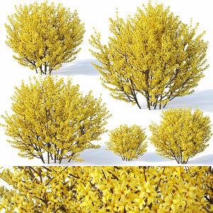 3D forsythia bushes
