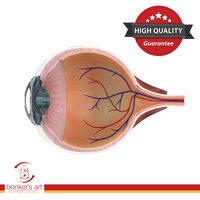 3D human eye dissection model