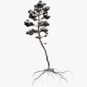 winter pine tree 5 3D model