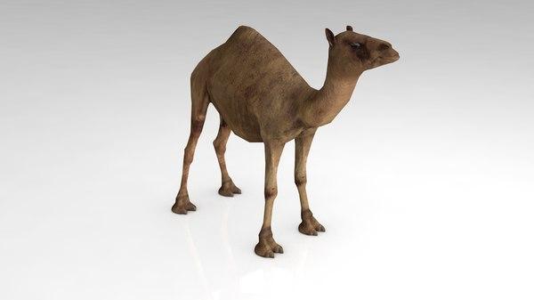 3D dromedary camel