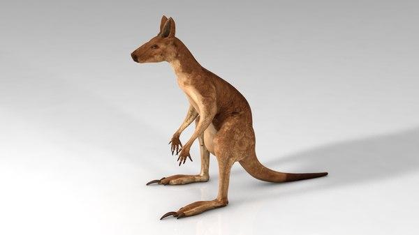 australian kangaroo 3D model