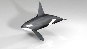 3D killer orca whale model