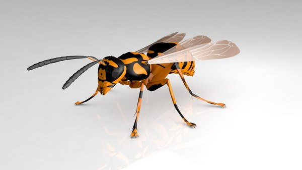 wasp insect model