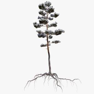 3D winter pine tree 6