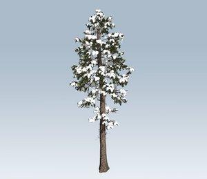 tree winter fir 3D model