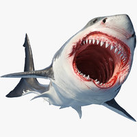 Great Shark White Animated