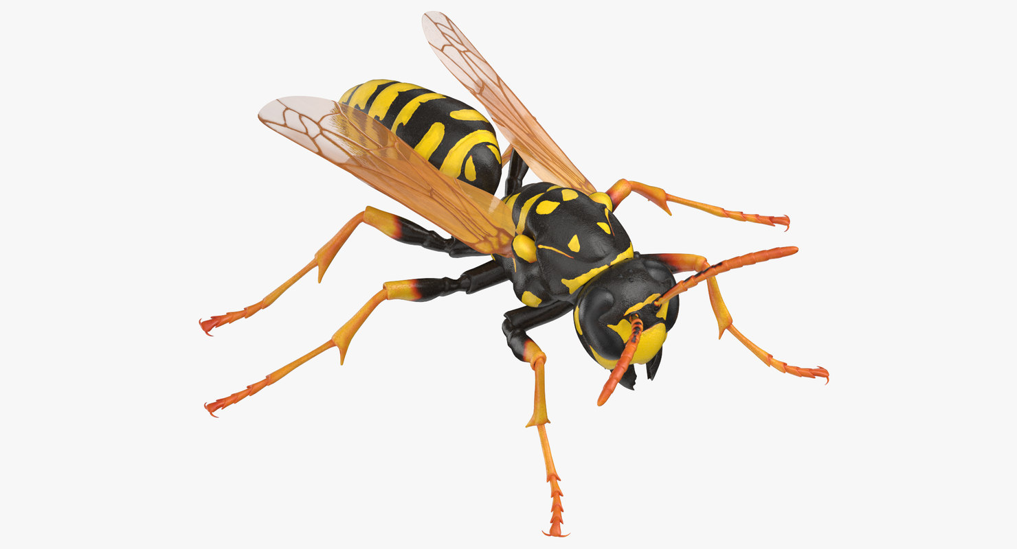 paper wasp standing model