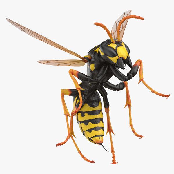 3D paper wasp stinging model