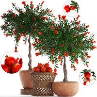 pomegranate tree fruit 3D model