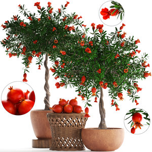 pomegranate tree fruit 3D model