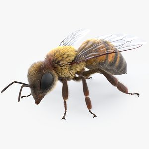 3D realistic bee real