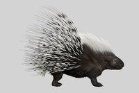 3D shave porcupine