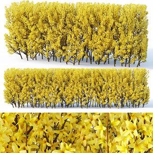 3D hedge cm model