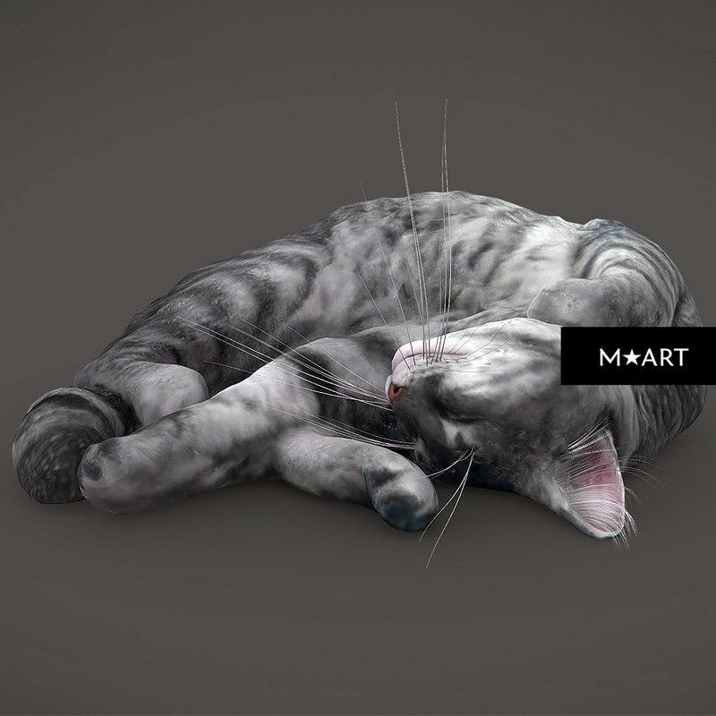 3D cat warm model