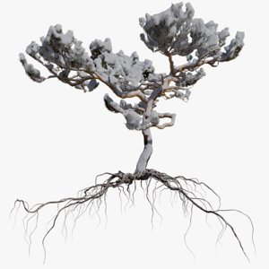 winter pine tree 7 3D model