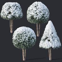 3D yew snow