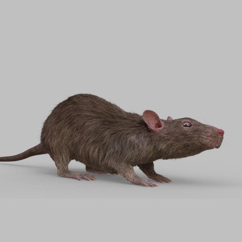 rat rig 3D