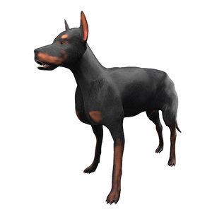 3D dog doberman animal