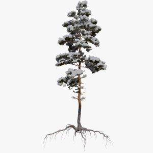 3D winter pine tree 8
