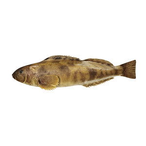 3D rasp fish
