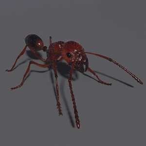 ant rig 3D model