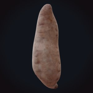3D sweet potato model