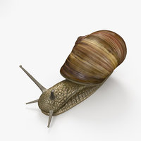 snail invertebrates animal model
