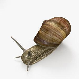 snail invertebrates animal model