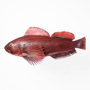 rasp fish 3D model