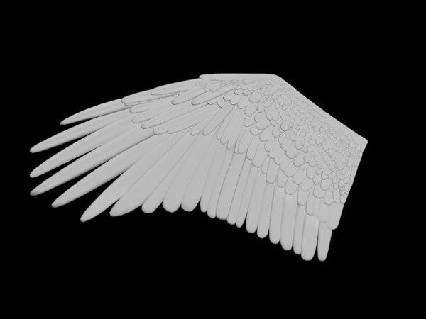 bird wing 3D