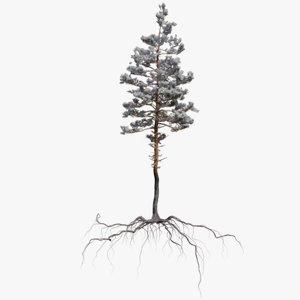 3D winter pine tree 9 model