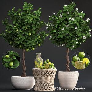 lime tree lemon fruit 3D model