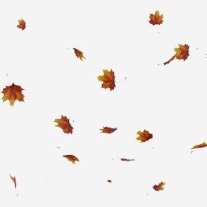 falling animations leaves 3D model