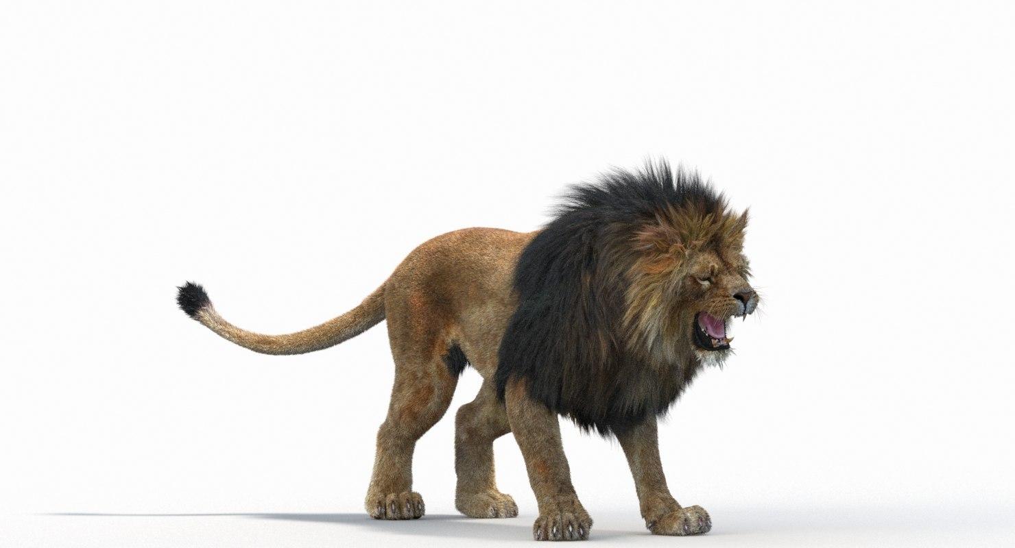 Lion_Roar_Animation0114.jpg1A6C9E48-EEA4-4F60-BF62-E37BCC2A3363Default-1.jpg