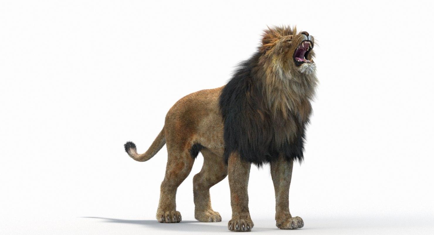 Lion_Roar_Animation0114.jpg1A6C9E48-EEA4-4F60-BF62-E37BCC2A3363Default-10.jpg